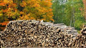 Cut to order lumber